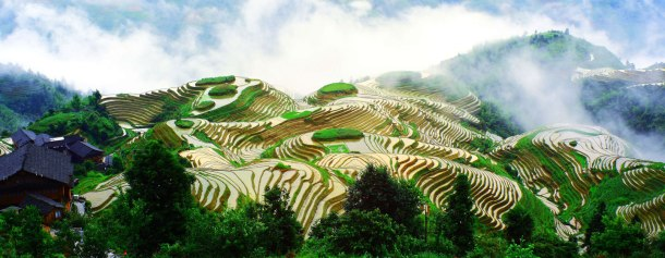 Rice Terraces System in Southern Mountainous and Hilly Areas, Longsheng Longji Terraces, China.