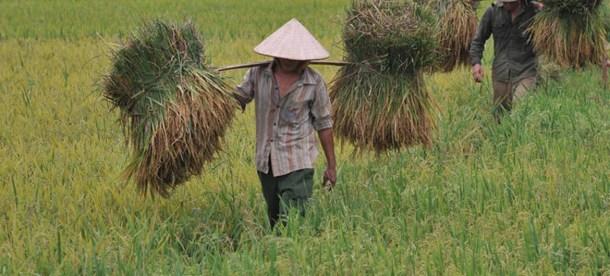 Agriculture UN NEws