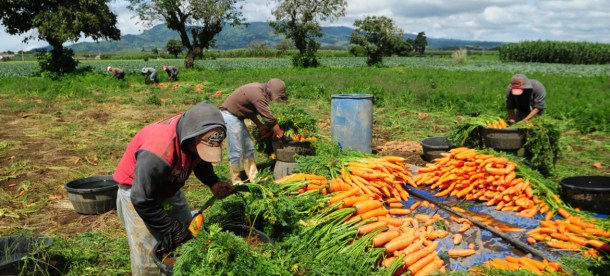 UN Agriculture 2018