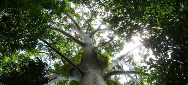 Forests UN News.jpg