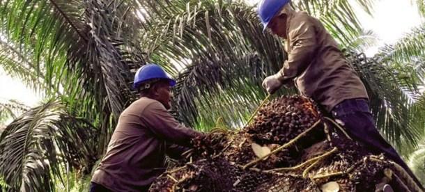 Palm Oil 2018.jpg