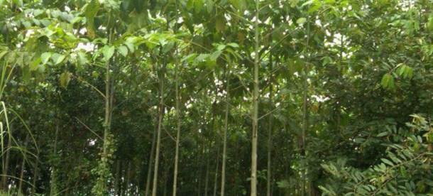Planting Trees UN 2018_