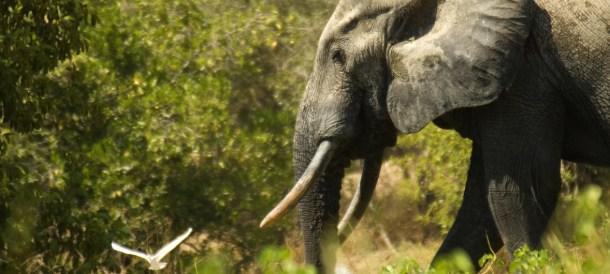 UN Environment Elephant 2018