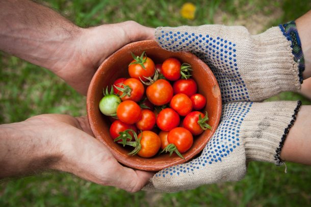 Food 2018 tomatoes