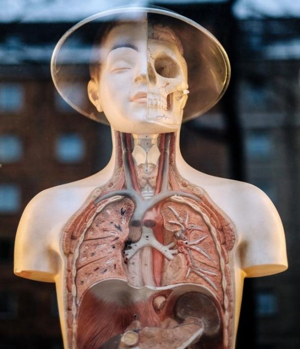 health-2019-humans.jpeg