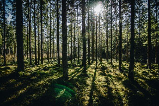 Sweden climate