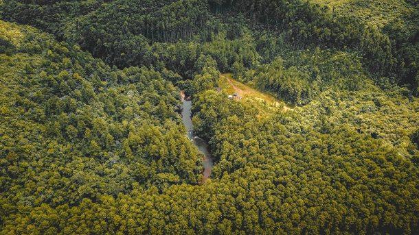 vegetation 2019_