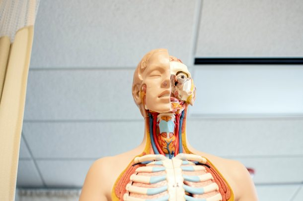 Anatomy 2019