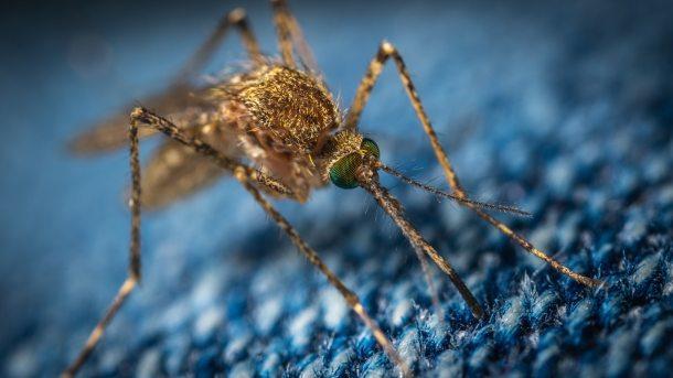 mosquito 2019