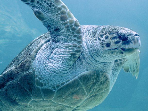 sea turtle 2019