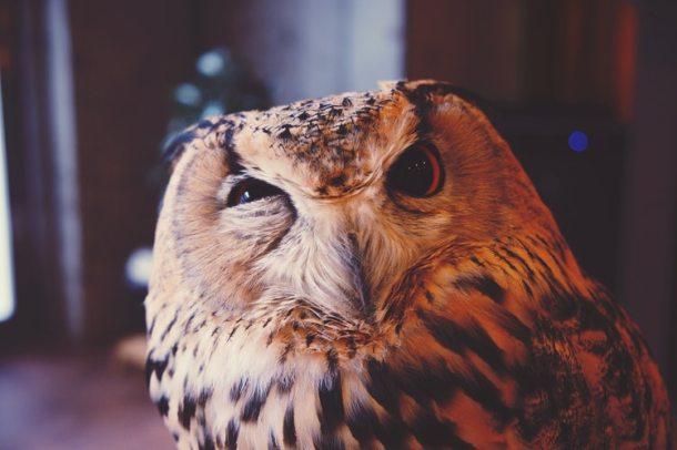 night owl 19