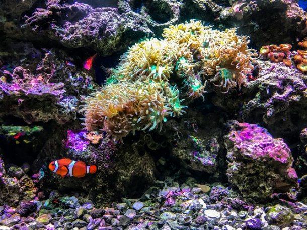 Reef 2019