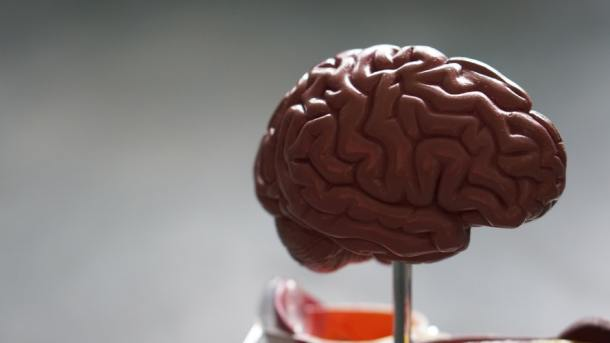 brain 2019