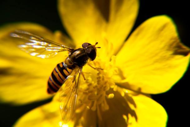 biodiversity 19