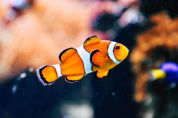 fish 19