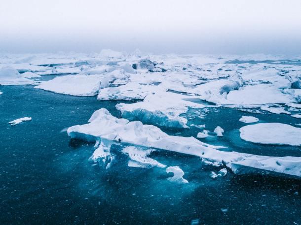 arctics