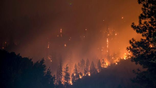 forest fires 9