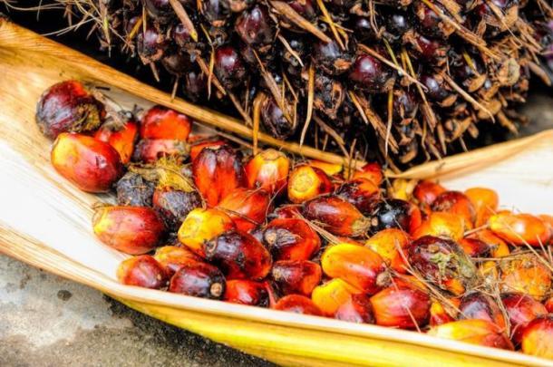 palm oil 19