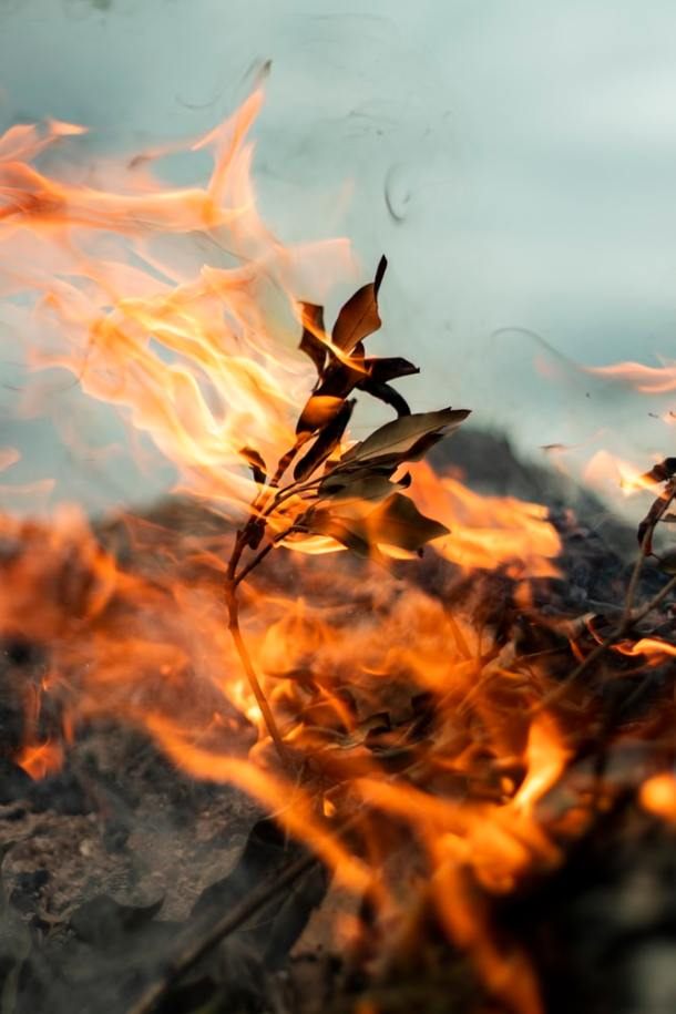 forest fires_