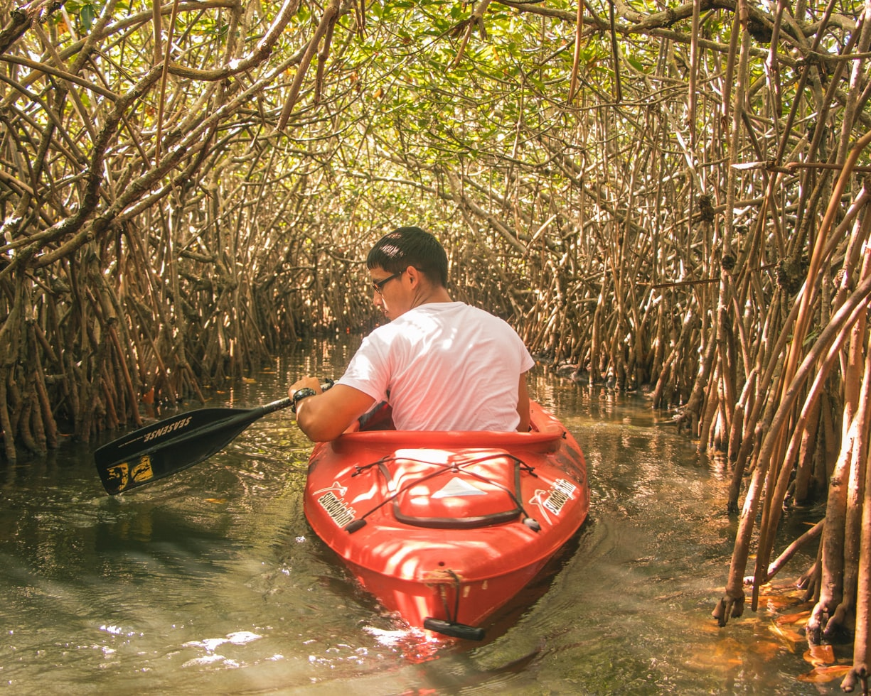 What the mighty mangrove tells us about our broken relationship with nature