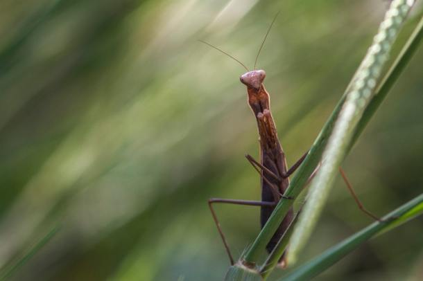 _biodiversity_