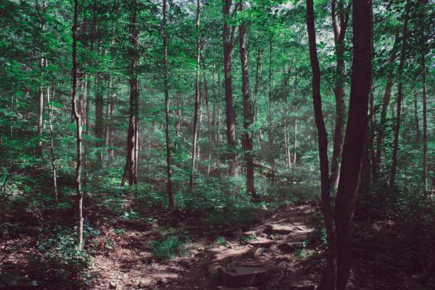 _forests