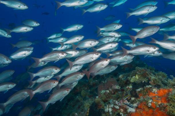 fisheries_