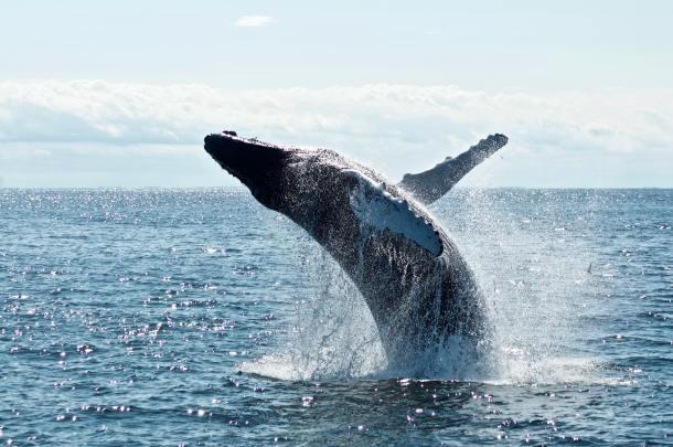 whale 2020